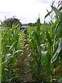 SJ9406 : Shareshill Crop Path by Gordon Griffiths