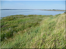 TQ7076 : Salt marsh near the mouth of Cliffe Creek by Marathon
