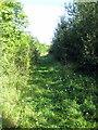 SP9540 : Path through Reynold's Woods by Philip Jeffrey