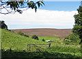 SE7290 : Heather-clad Spaunton Moor by Pauline E