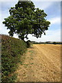 SP9636 : Path by the hedge across the field by Philip Jeffrey
