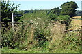 SP9534 : Path to Horsepool lane by Philip Jeffrey