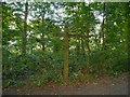 SJ6576 : Big Wood, Marbury Country Park by David Dixon