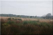 TQ0215 : Amberley Wild Brooks by N Chadwick