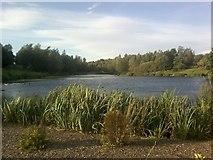 SJ9599 : Chadwick Dams 1 by Tom Hindley