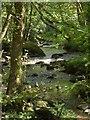 SX7289 : River Teign by Derek Harper
