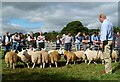 NT4527 : Judging sheep at the Yarrow and Ettrick Agricultural Show by Walter Baxter