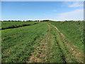 TL5489 : Westmoor Drove by Hugh Venables
