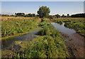 SJ9024 : Doxey Marshes by Derek Harper