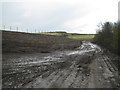 SP2085 : Track and tree-planting, Packington landfill site  by Robin Stott