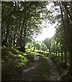 SH8204 : Glyndwr's Way by Derek Harper