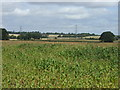 TL1464 : Crop field by JThomas