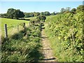 SP9203 : Bridleway to Bellows Wood by michael