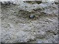 SY4292 : 1GL Bolt: Chideock, St Giles Church by Brian Westlake