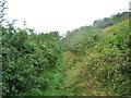 SY9482 : Underhill path by E Gammie