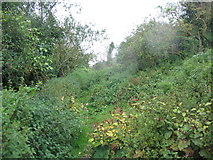 SY9482 : Underhill path and nettles by E Gammie