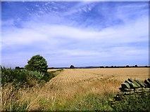 NZ1544 : Cornfields near Cornsay House by Robert Graham