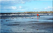 NX1896 : Dog-Walking at Girvan by Mary and Angus Hogg