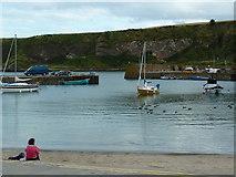 NO8785 : Stonehaven Harbour by Alexander P Kapp
