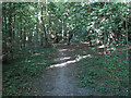 TQ5583 : Path in Warwick Wood by Roger Jones