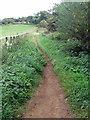 SP8929 : Path up Partridge Hill by Philip Jeffrey