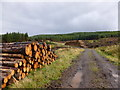 NS7382 : Forestry track and log piles (2), Kilsyth Hills by Alan O'Dowd