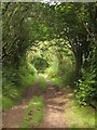 SN8195 : Glyndwr's Way, Nant Fadian valley by Derek Harper