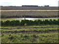 TF5625 : Dike and reclaimed farmland near Ongar Hill by Richard Humphrey