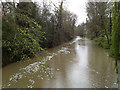 SP3165 : River Leam in spate, 1 May 2012 (2 of 2) by Robin Stott