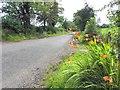 H4761 : Corboe Road, Raneese by Kenneth  Allen