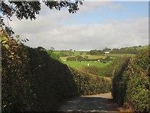SY2793 : Combpyne Road by Derek Harper