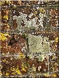 TQ1773 : Lichen on a wall, Ham House by Stefan Czapski