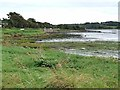 S8512 : Shoreline at the upper end of Bannow Bay by Oliver Dixon