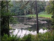 NT4227 : Upper Lake, Bowhill by Jim Barton