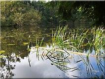 NT4227 : Lower Lake, Bowhill by Jim Barton