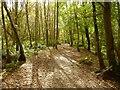 NS2883 : Path through Duchess Wood by Lairich Rig