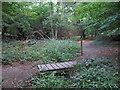TL4702 : Footbridge over small stream by Roger Jones