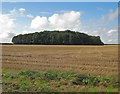 TA0414 : Stubble Field and Copse on Elsham Wolds by David Wright