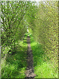 TR3256 : Bridleway alongside the A256 by Nick Smith