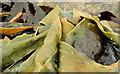 J4181 : Seaweed, Cultra (4) by Albert Bridge