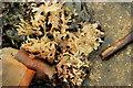 J4181 : Seaweed, Cultra (5) by Albert Bridge