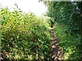 SO8278 : Himalayan balsam alongside an unmapped footpath by Christine Johnstone