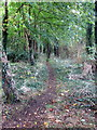 SP7431 : Path through the woods near Pilch Farm by Philip Jeffrey