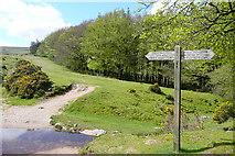 SX7280 : Bridleway to Hameldown Tor by Graham Horn