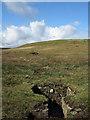 NY9024 : Grouse butt line on rising ridge by Trevor Littlewood