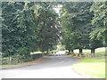 NZ0562 : Road near Bywell by Paul Franks
