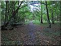 TL4102 : Path In Brookmeadow Wood by Roger Jones