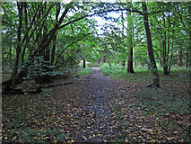 TL4102 : Path In Brookmeadow Wood by Roger Jones