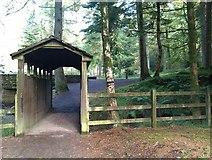 H4881 : Gortin Glens Forest Park (2) by Kenneth  Allen