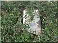 NO1541 : Scroggie Hill Triangulation Pillar - somewhat camouflaged by Peter Wood